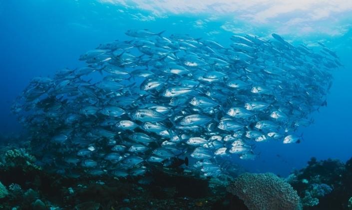 deep sea fishing blue paradise DR adult sex vacation resort