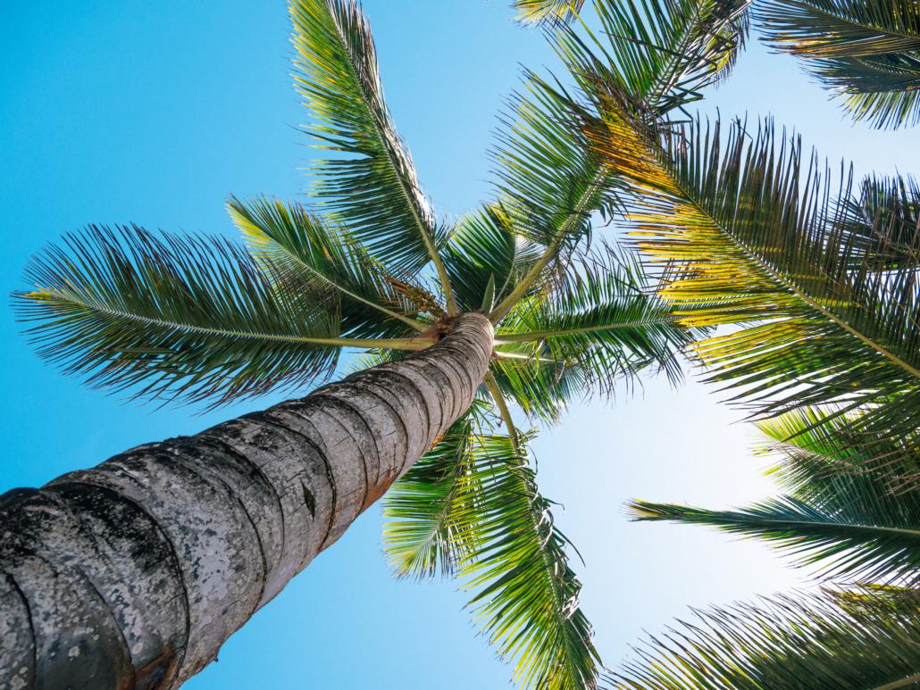 Blue Paradise DR under lush palm trees